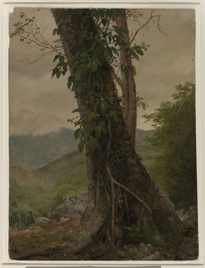 The lower parts of two trees and of a climbing plant are shown in the foreground against a hilly, wooded background. Verso: Rough graphite sketches of trees.