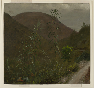 Under a clouded sky, a valley opens to distant mountains, while wild sugar cane grows in the foreground.