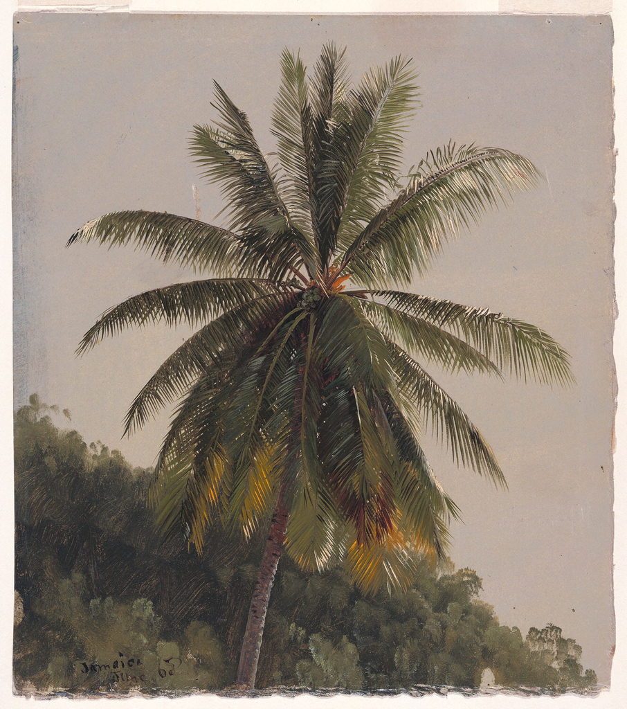 The upper part of a palm tree with an array of fronds shown against a wooded slope.