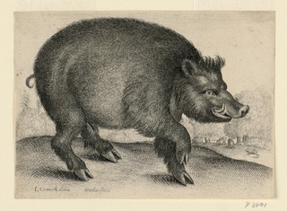 A boar seen in profile, facing toward the right with front foot lifted. In right background, more boars under trees.