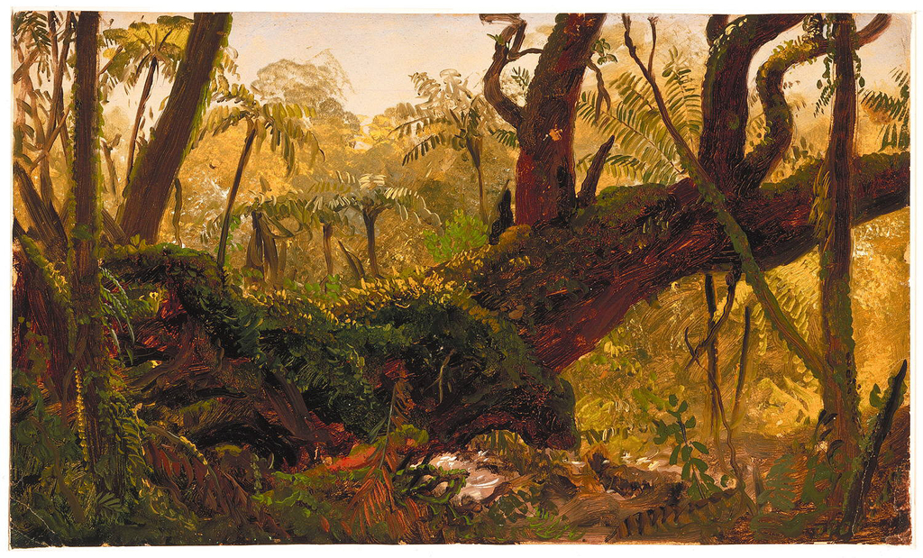 A straight on view of dense tropical undergrowth and vegetation. Dark tree trunks in the foreground create a strong vertical thrust from left to right across the image, intensifying the mystery of the scene.