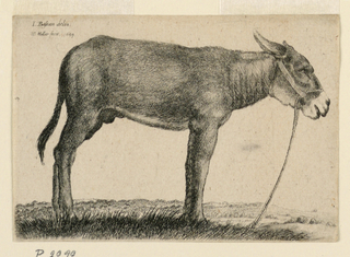 A donkey seen in profile, standing on grassy ground facing to the right.