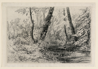 A shallow brook meanders through a thicket, overhund by trees.