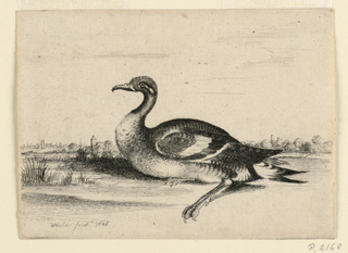 A waterfowl swimming in water; seen in profile, facing left. In background, at left, a town. At right, a castle.