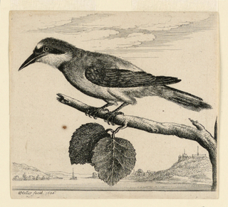 A jay bird on a tree branch seen in profile, left facing. The branch has two leaves and grows over a river. In background, on both sides of river, hills and trees. At right, houses. In background, a small boat.