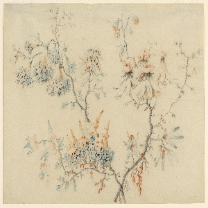 Drawing, Flowering Branches