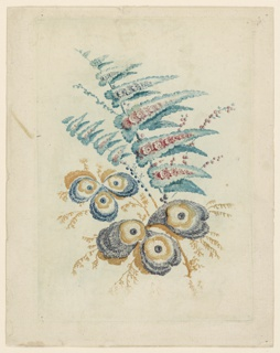 An imagined flower arrangement - pennant-like leaves with small flowers emerge from stems at a diagonal within the composition. Below, smaller botanicals comprised of leaves and blossoms resemble peacock feathers. Etched lines articulated in teal, pink, purple, and ochre.