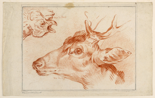 Study of the Heads of a Chicken and Stag Both shown in profile. The chicken is above at left, facing right with an open beak. The stag is below, facing left.
