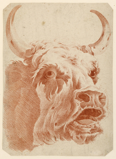 "Head of a cow, facing one quarter right, its mouth open. Probably from: ""Premier Cahier de fragment et de principes de dessius de tous genre…"""