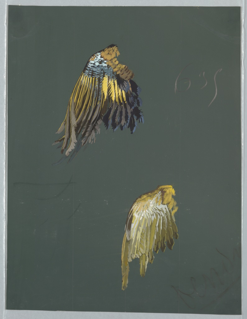 Two bird wings with multi-colored feathers on a dark grey-green ground. The wings at the top consist of feathers in brown, yellow, various shades of blue, white, and black. The bottom wings contain the colors yellow, brown, grey, and white.