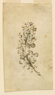 Jewelry design for a brooch. Two branches, turned to the right, with a knot below, blossoms, and leaves. Two hanging teardrop diamonds.