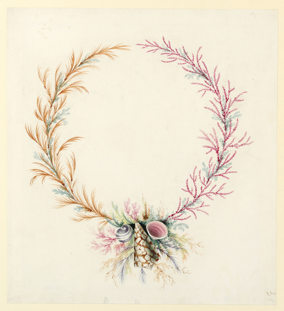 Design for a medallion composed of leaves, coral and shells.