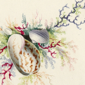 Design for a medallion composed of coral, leaves and shells.