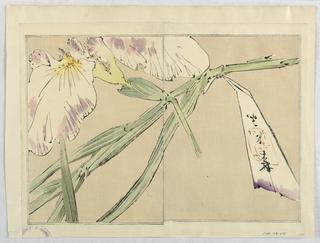 Print, Flowers