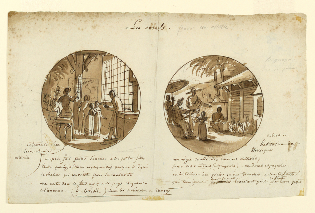 Sketches for two plate designs on the theme of pineapples. The sketch on the left is a preliminary drawing for 1989-13-14. In a greenhouse interior, a man in the right foreground offers a piece of pinapple to two young children. Another man in the left middleground points to a themometer hanging on a verticle roof support to indicate the ideal temperature for ripening pineapples. Potted pineapples rest on shelves to his left.  A map of Brazil hangs on the rear wall, center. The sketch to the right shows in the right foreground the exterior of a Mexican house. A man in left middleground wearing a sombrero points to a man kneeling on the ground in front of the house picking pineapples. Mexican pottery appears on a low wall, center middleground, attached to the house.  In the left foreground, a woman shaded by an umbrella points to the kneeling man while offering pineapple slices to two small children. On verso at upper left, (sideways), in graphite, is a circular sketch of figures of a woman and three children in an interior, and at right a sketch of a duck.