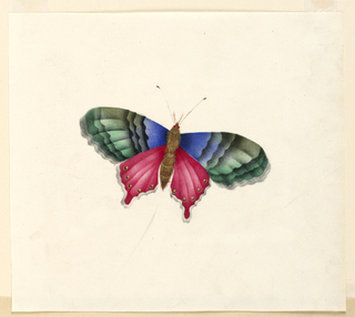 Drawing, Butterfly