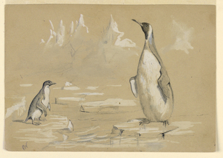 Drawing, Penguins on an ice floe, 1884
