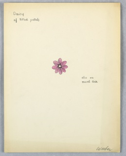 1 drawing of  pink daisy with petals like a pinwheel.
