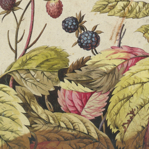 Strawberries and blackberries with big leaves growing from bottom. Blue lower edge, gray margin at left.