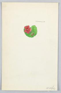 1 drawing on paper: red geranium on geranium leaf.