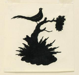 A pheasant on a scrub-tree.