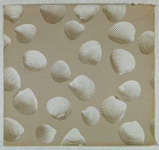 "Cockle Shells - randomly arranged shells having the appearance of being photographically reproduced. Each shell has gold highlights. Printed on a tan background simulating sand. Three samples removed from ""American Futures III, Volume 19"" sample book."