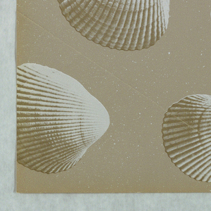 """Cockle Shells - randomly arranged shells having the appearance of being photographically reproduced. Each shell has gold highlights. Printed on a tan background simulating sand. Three samples removed from """"American Futures III, Volume 19"""" sample book."""