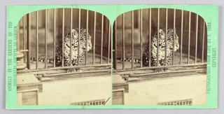 Stereoscope Slide, Zoo animals