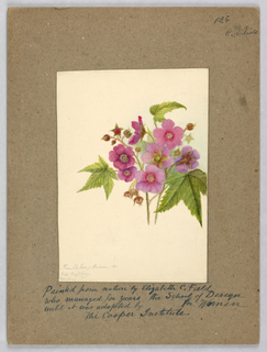 Vertical rectangle. Pink blossoms and green serrated, star-shaped leaves.