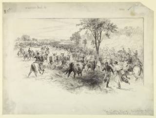 The Confederate Cavalry rounding up the herds of cattle