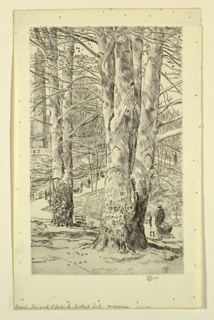 Print, Beech Trees and Obelisk, Central Park
