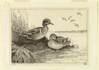 Print, Design for Federal Duck Stamp