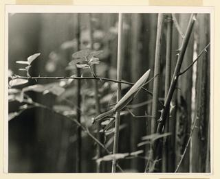 Photograph (USA)