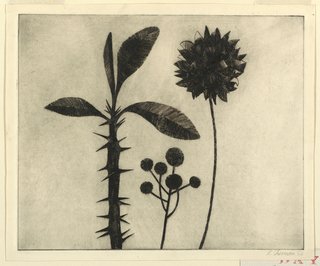 Horizontal rectangle. Three stalks of desert blooms: a thorny stem with four broad leaves; small stems terminating in pompons; a chrysanthemum-like flower.