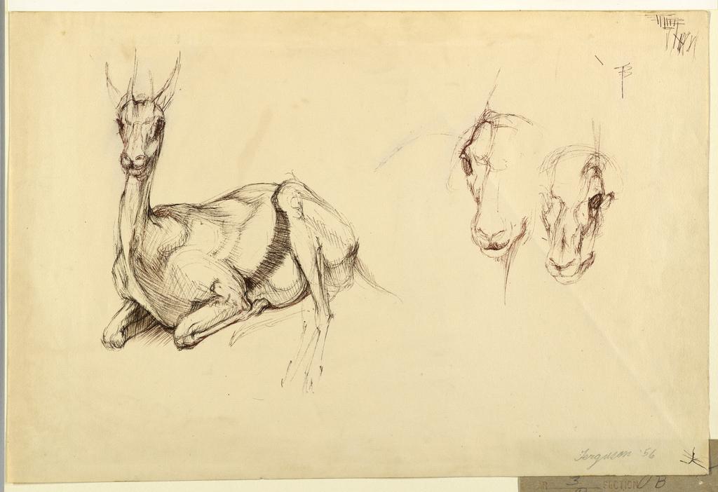 Print, Antelope