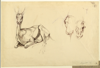 "Horizontal rectangle. A lying antelope is shown facing frontally, left, and unfinished sketches of two antelope heads, at right. Signed, lower right (in pencil): ""Ferguson '56."""