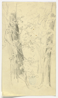 Sketch of a group of trees. Large trunk, left, with vines around it. Two other trunks, right, with some foliage.