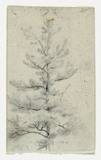 Drawing, Sketch of a Tree