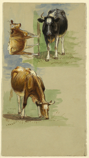Vertical view with a black and white steer, standing, shown from the head at top right; a brown one, walking shown obliquely and horizontally at top left; and a grazing brown one shown obliquely at center left.