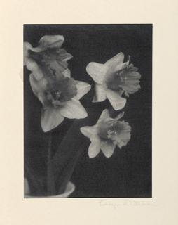 Photograph, Daffodils in a Vase, ca. 1930-35