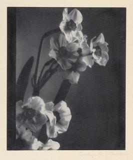 Photograph, Flowers, ca. 1930-35