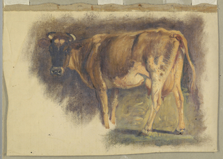 A standing cow is obliquely shown from the right back. The head is turned toward the spectator. The fore feet are not shown.