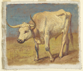A white steer, obliquely shown from the left front, walking towards left. White margins.