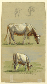 Recto:  Vertical view of tow hind parts of calves at top; a grazing white cow shown in profile at center; and the same cow shown obliquely from the back at bottom.  Verso in opposite direction:  Two grazing cows shown from the heads, with the right one not entirely visible, at top.