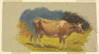 Cow standing in a meadow, shown in profile, turned toward right. Bushes are shown laterally in the background. Irregular margins of light grey grounding color, laterally and on top.