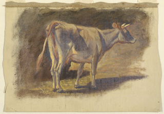 A standing cow facing towards the right. Margins show grounding color.