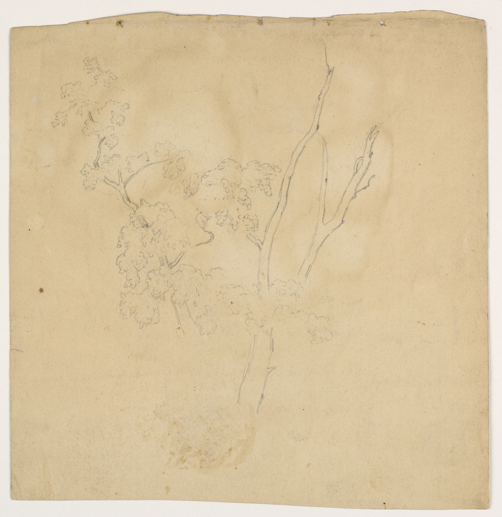 Sketch of a tree with bare branches, at right, and an upper branch with foliage, at left, all extending upwards.