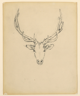 Sketch of a stag head.