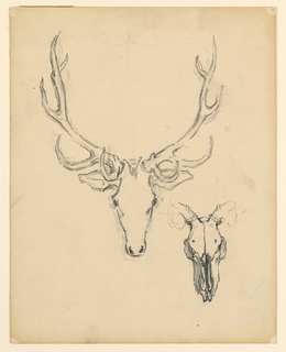 A sketch of a stag head and skull.