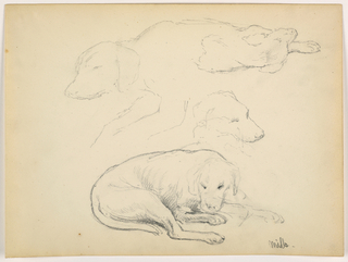 Drawing, Milo (a Pointer), Several Studies, ca. 1862